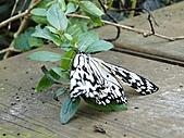 【′11-0228】動物園:DSC05005.JPG
