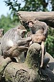 【'11-0228】動物園之叁:IMG_5623.JPG
