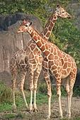 【'11-0228】動物園之叁:IMG_5850.JPG