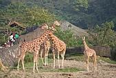 【'11-0228】動物園之叁:IMG_5852.JPG