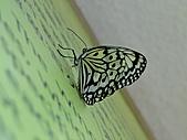 【′11-0228】動物園:DSC05015.JPG