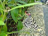 【′11-0228】動物園:DSC05017.JPG