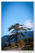全程550公里之福壽山賞楓二日遊:DSC_6881.jpg