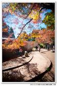 全程550公里之福壽山賞楓二日遊:DSC_6846.jpg