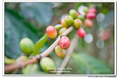 雲林古坑華山文學步道咖啡園露營:DSC_7764.jpg