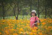 中秋國慶連假明潭遊(D750+HTC10):DSC_2259.jpg