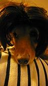 雪兒的寶貝喵:P1040606.JPG
