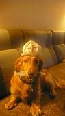 雪兒的寶貝喵:P1050693.JPG