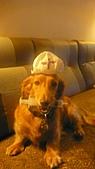 雪兒的寶貝喵:P1050694.JPG