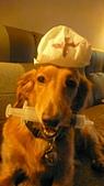 雪兒的寶貝喵:P1050695.JPG
