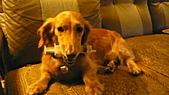 雪兒的寶貝喵:P1050701.JPG