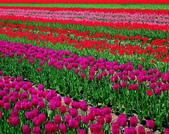 出國旅遊照片:漂亮的花