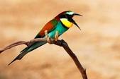 未分類相簿:鳥13.jpg