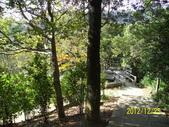未分類相簿:拱北殿後山步道楓樹林5