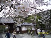 未分類相簿:清水寺櫻花9 .jpg