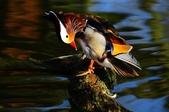 未分類相簿:鳥15.jpg