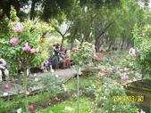 未分類相簿:士林官邸紅及粉紅色玫瑰花1.jpg
