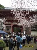 未分類相簿:醍醐寺2.jpg