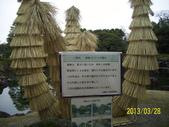 未分類相簿:二條城內蘇鐵防凍.jpg
