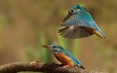 未分類相簿:鳥16.jpg