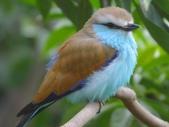 未分類相簿:鳥5.jpg
