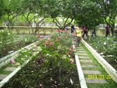 未分類相簿:士林官邸紅及粉紅色玫瑰花2.jpg