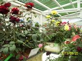 未分類相簿:士林官邸室內豔紅色玫瑰花1.jpg