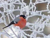 未分類相簿:鳥6.jpg