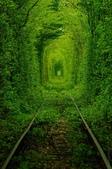 未分類相簿:樹隧道5.jpg