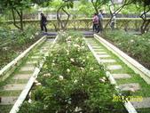 未分類相簿:士林官邸紅及粉紅色玫瑰花3.jpg