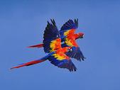 未分類相簿:鳥17.jpg