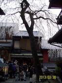 未分類相簿:清水寺外街道櫻吹雪2 .jpg