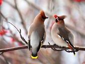 未分類相簿:鳥7.jpg
