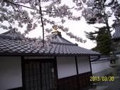 未分類相簿:清水寺櫻花11 .jpg