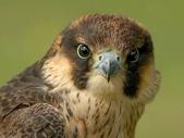 未分類相簿:鳥8.jpg