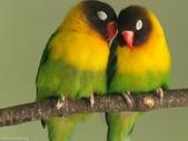 未分類相簿:鳥18.jpg