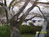 未分類相簿:清水寺櫻花2 .jpg