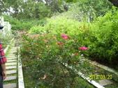 未分類相簿:士林官邸紅及粉紅色玫瑰花5.jpg