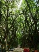 未分類相簿:樹隧道8.jpg