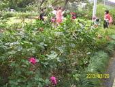 未分類相簿:士林官邸紅色玫瑰花.jpg