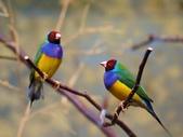 未分類相簿:鳥9.jpg