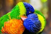 未分類相簿:鳥10.jpg