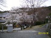 未分類相簿:清水寺櫻花4 .jpg