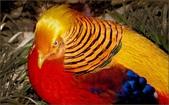未分類相簿:鳥11.jpg