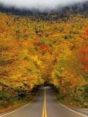 未分類相簿:樹隧道1.jpg