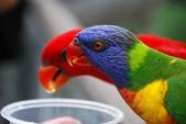未分類相簿:鳥12.jpg