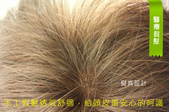 手工醫療假髮:青山手工醫療假髮0.jpg