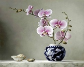 比利時Pieter Wagemans*油畫/花卉--11-17-2013:securedownload-11-16-2.jpg