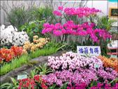 2011台灣國際蘭展-1:DSCN0275-1.jpg