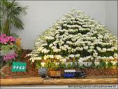 2011台灣國際蘭展 -2:DSCN0288-1.jpg